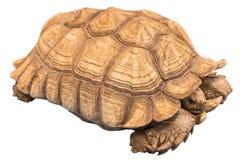 Big seychelles turtle Stock Photo