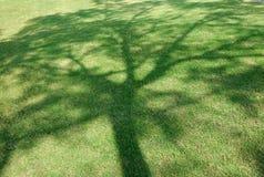 Big shade tree Royalty Free Stock Photo