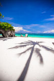 Big shadow palm tree on the white sand beach Stock Image