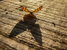 Big shadow of small orange butterfly. Latin name Pseudopanthera macularia on the wooden desk in Serbia royalty free stock photos