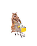 The big shaggy cat with shopping cart isolated on white..number Royalty Free Stock Photography