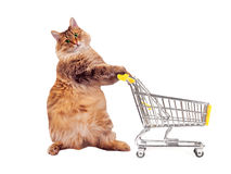 The big shaggy cat with shopping cart isolated on white..number 9.  Royalty Free Stock Image