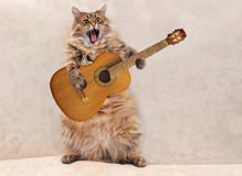 The big shaggy cat is very funny standing.  Royalty Free Stock Photo