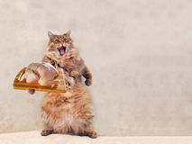 The big shaggy cat is very funny standing, Stock Photo