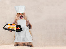 The big shaggy cat is very funny standing,cook 9 Stock Photography