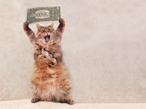 The big shaggy cat is very funny standing.shelter 12 Stock Photos