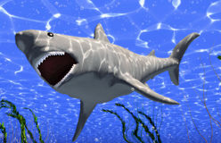 Big shark. The white big shark jaws (3D rendering Royalty Free Stock Photography