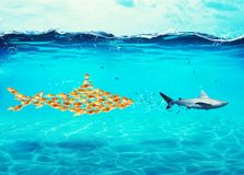 Big shark made of goldfishes attack a real shark. Concept of unity is strength, teamwork and partnership. Big shark made of goldfishes attack a real scared shark stock image