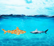 Big shark made of goldfishes. Concept of unity is strenght,teamwork and partnership Royalty Free Stock Photos