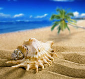 Big shell Royalty Free Stock Images