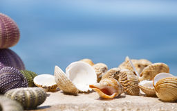 Big Shell Stock Photography