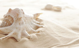 Big shell Stock Images