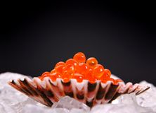 Big shell filled with red caviar on ice Stock Image