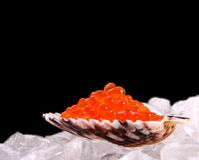 Big shell filled with red salmon caviar on ice Royalty Free Stock Image