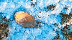 The big shell laying at snow royalty free stock image