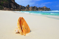 Big shell on the ocean shore Stock Images