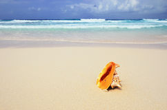 Big shell on the ocean shore Stock Photo