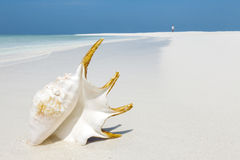 Big shell on a white sand beach Royalty Free Stock Image