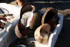 Big shells Stock Photo