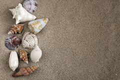 Big shells in sand Royalty Free Stock Photo