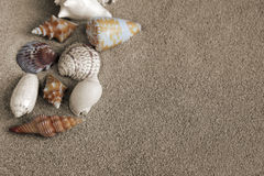 Big shells in sand Stock Photos