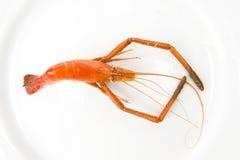 Big Shrimp Stock Photos