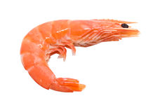 Big shrimp Stock Photo