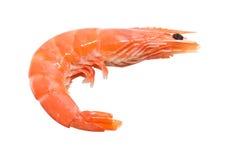Big shrimp Stock Photo