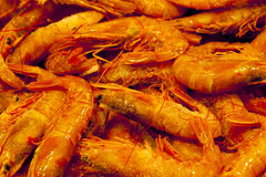 Big Shrimp closeup Stock Photography