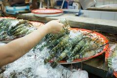 Big shrimp. A man holding big size of raw shrimp in fresh market, Thailand Royalty Free Stock Image