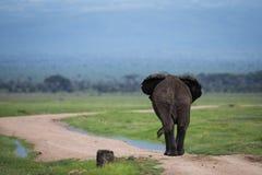 Big single elephant on african road. Big single elephant on the road in Amboseli National Park Kenya stock image
