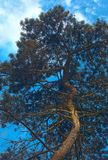Big single tree. HDR image Stock Images
