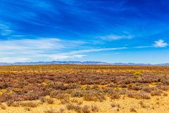 Big Skies. A farm in the klein Karoo, also known as the succulent Karoo due to the succulent plants that grow there stock image
