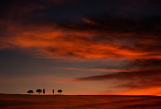 Big sky dramatic sunset horizon with trees Royalty Free Stock Photos