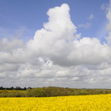 Big Sky and landscape. Farmland with oil seed crop in flower and big cloud sky Royalty Free Stock Photo