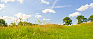 Big sky wide. Big blue sky with fluffy clouds, contrails, trees and pasture stock images