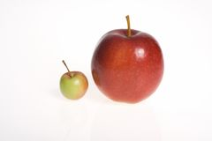 Big and small - apples on white background. Two apples - big one and small one - isolated in whie background Stock Photos