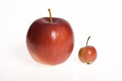 Big and small - apples on white background. Two apples - big one and small one - isolated in whie background Stock Photo