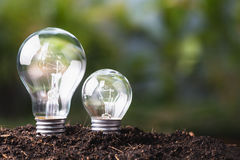 Big and Small Bulb Growing Stock Photography