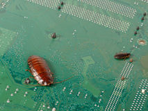 Big and small cockroaches on the  computer microcircuits. Concept Royalty Free Stock Image