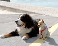 Big and small dogs on the street. Stock Photo