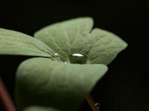Big and small drops Stock Photo