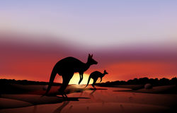 A big and a small kangaroo in the desert Royalty Free Stock Image