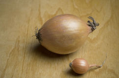 Big and small onions Royalty Free Stock Photography