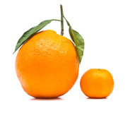 Big and Small Orange Royalty Free Stock Photography