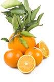 Big and small orange Stock Photos