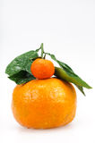 Big and Small Orange Stock Photography