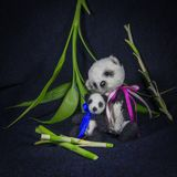 Big and small pandas sitting among the bamboo. Two dolls Royalty Free Stock Photos