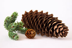 Big and small pine cones with pine twig Royalty Free Stock Photo