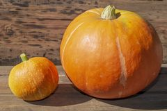 Big and small pumpkin royalty free stock photo